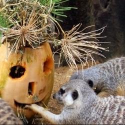 Halloween no Jardim Zoológico